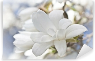 Beautiful magnolia blossom Self-Adhesive Wall Mural