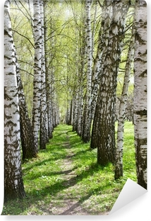 Birch-tree alley Self-Adhesive Wall Mural