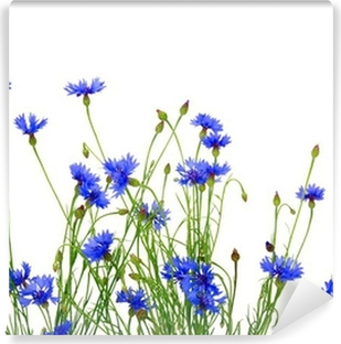 blue cornflowers Self-Adhesive Wall Mural