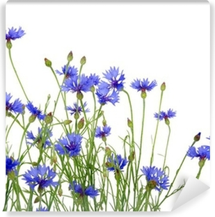 blue cornflowers Self-Adhesive Wall Mural