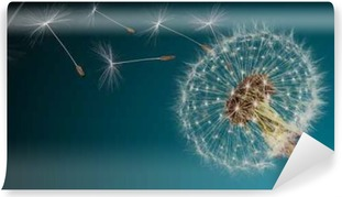Close-up of dandelion seeds on blue natural background Self-Adhesive Wall Mural