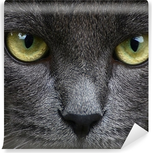 Close up portrait of grey kitten Self-Adhesive Wall Mural