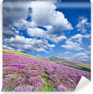 Colorful hill slope covered by violet heather flowers Self-Adhesive Wall Mural
