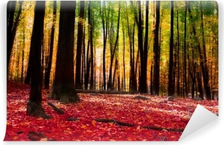 Forest in autumn with golden light Self-Adhesive Wall Mural