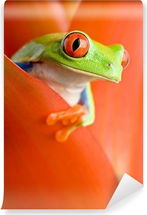 frog in a plant Self-Adhesive Wall Mural