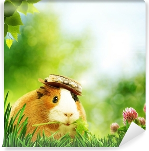 Funny guinea pig or cavia. Abstract natural backgrounds Self-Adhesive Wall Mural