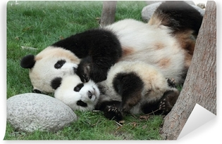 Giant panda with its cub Sleeping on the grass Self-Adhesive Wall Mural