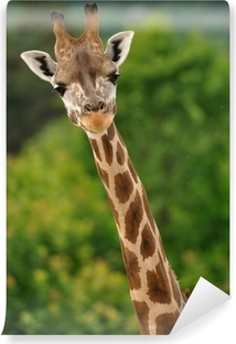 Giraffe head with neck Self-Adhesive Wall Mural