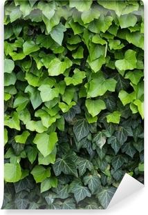 Green ivy, close up Self-Adhesive Wall Mural