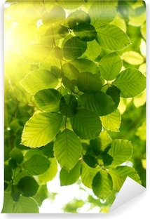 Green leaves with sun ray. Self-Adhesive Wall Mural