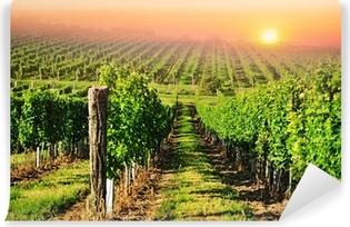 Green vineyard in South Moravia at sunrise Self-Adhesive Wall Mural