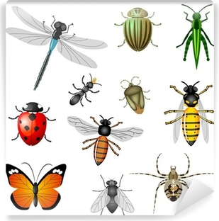 Insects or bugs, vector collection Self-Adhesive Wall Mural