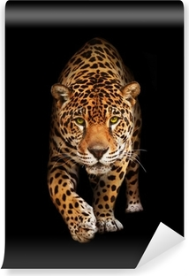 Jaguar in darkness - front view, isolated Self-Adhesive Wall Mural