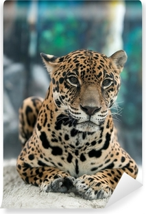 jaguar ( Panthera onca ) Self-Adhesive Wall Mural