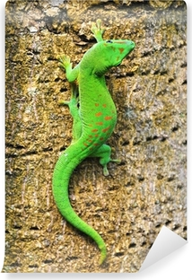Madagascar day gecko .. Self-Adhesive Wall Mural