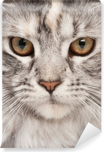 Maine-coon close-up portrait Self-Adhesive Wall Mural