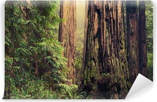 Old Redwood Trees Self-Adhesive Wall Mural