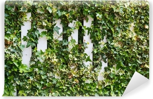 Parthenocissus tendril climbing decorative plant Self-Adhesive Wall Mural