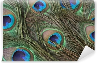 peacock feathers Self-Adhesive Wall Mural