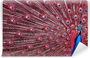 Peacock with Red Feathers Self-Adhesive Wall Mural
