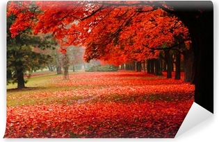 red autumn in the park Self-Adhesive Wall Mural