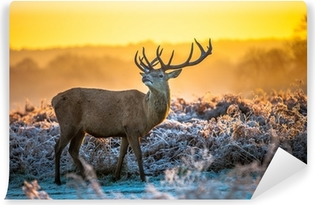 Red deer in the winter aura Self-Adhesive Wall Mural