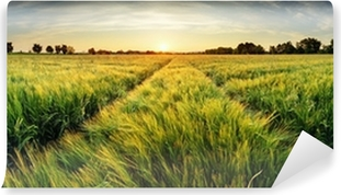 Rural landscape with wheat field on sunset Self-Adhesive Wall Mural