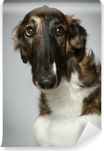 Russian Borzoi puppy (5 months) Close-up portrait Self-Adhesive Wall Mural