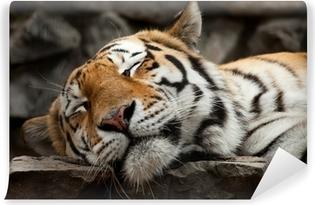 sleeping tiger Self-Adhesive Wall Mural