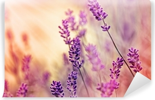 Soft focus on beautiful lavender and sun rays - sunbeams Self-Adhesive Wall Mural