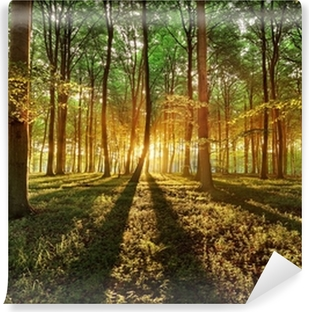 Spring forest Self-Adhesive Wall Mural