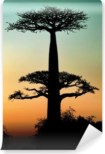 Sunset and baobabs trees Self-Adhesive Wall Mural