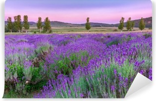 Sunset over a summer lavender field Self-Adhesive Wall Mural