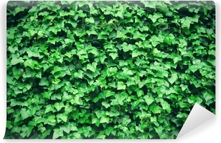 Thick green ivy leaves background Self-Adhesive Wall Mural