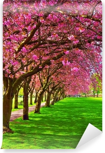 Walk path surrounded with blossoming plum trees Self-Adhesive Wall Mural