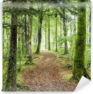 Woodland Path Self-Adhesive Wall Mural