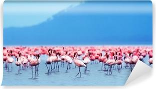 Afrikanske flamingoer Selvklæbende fototapet