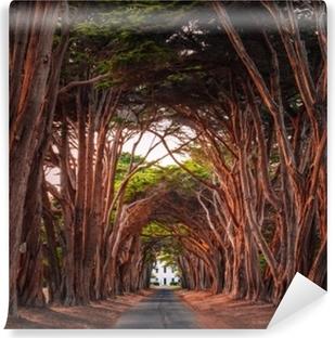 Fantastiske cypress træ tunnel på punkt reyes national strand, Californien, USA. træer farvet rødt ved solnedgangens lys. Selvklæbende fototapet