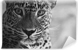 Leopard Selvklæbende fototapet