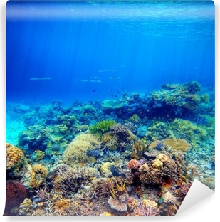 Undervands scene. Koralrev, farverig fisk og solrig himmelskinin Selvklæbende fototapet