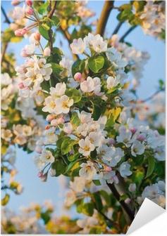 Æbletræ blomst Selvklæbende plakat