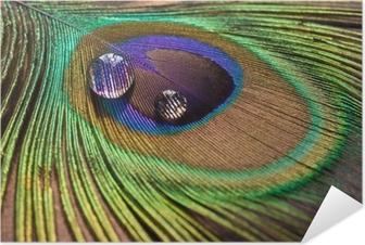 Drops på påfuglens fjer Selvklæbende plakat
