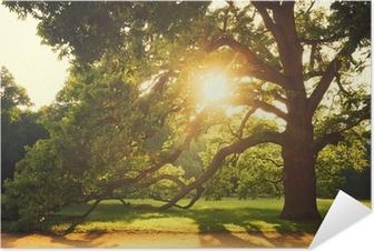 Gamle store træ Selvklæbende plakat
