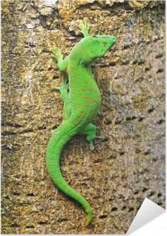 Madagaskar dag gecko Selvklæbende plakat