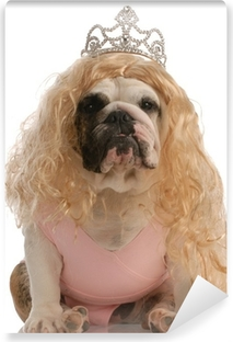 Selvklebende fototapet Bulldog kledd som prinsesse med stygg parykk og tutu 3b2d355f1dba9
