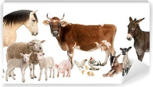 Selvklebende fototapet Gruppe av husdyr: ku, sau, hest, esel, kylling, lam