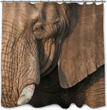 Elephant Bulls Head Shower Curtain