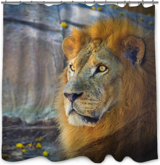 Lion Shower Curtain O PixersR We Live To Change