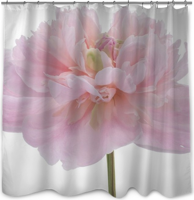 Peony Shower Curtain O PixersR O We Live To Change