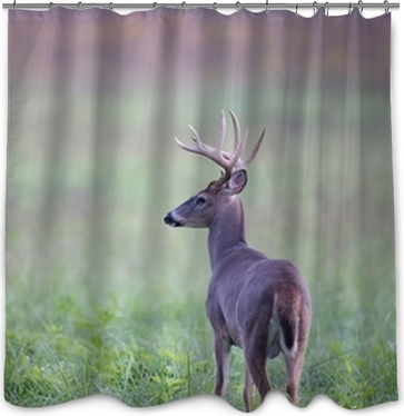 White Tailed Deer Buck In Foggy Meadow Shower Curtain